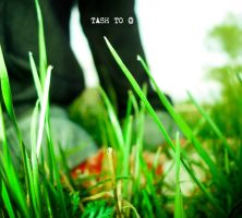 my spring by tash-to