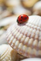 lady beetle by MicroPilot