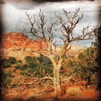 Dead Tree Capitol Reef NP by houstonryan
