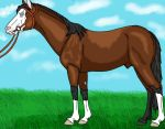 Transylvanian Thoroughbred by HorseLover4000