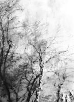 the sky in the trees by Amalus