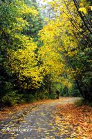 Fallen leaf road by kayaksailor