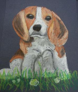 Beagle oil pastel by AlanaKerr