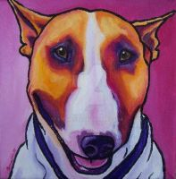 Colored Bull Terrier by StudioSRV