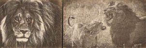 Lion on Wood 2 by WoodBoxEdition
