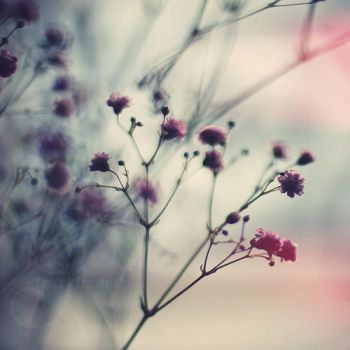 delicate by prismes