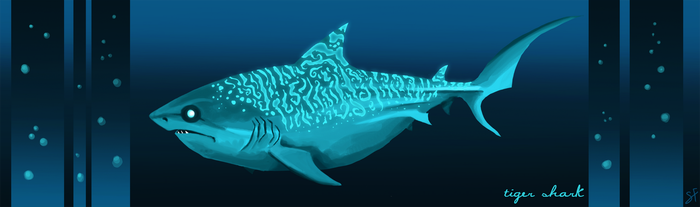 Tiger Shark by shayfifearts