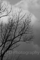 Gloomy Tree by firegal01