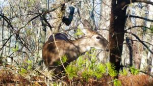 Doe and Baby by jesus-at-art
