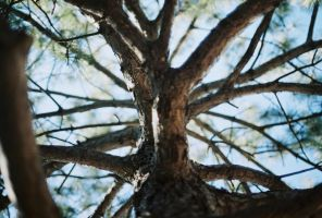 Web of Branches by TLY88