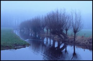 Misty morning willows by jchanders
