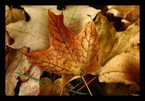 Leaves by RiverW