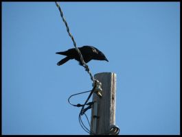 Nevermore by LaughingSquid