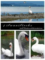 swanStocks by stocksWonderworld
