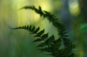 Ferns And The Mosquito by JoniNiemela