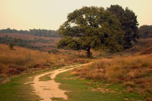 Veluwe 12 by Esveeka-Stock