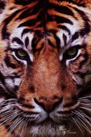 G.T. Tiger by CecileVCreation