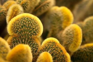 Cactus by mairlin