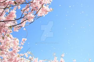 Sakura tree by ShCy