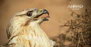Falcon by ahmed-Alsheme