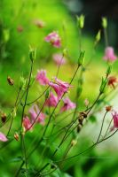 Small pink flowers by fotografka
