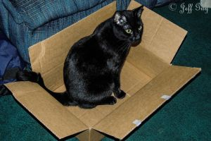 Project 365 - 359 - Cat In The Box by jguy1964