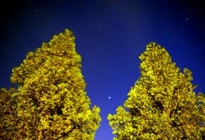 two trees by foodshelf