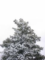tree snowing by rclee21