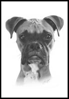 Tyson Pencil Drawing by golfiscool