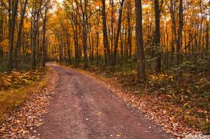 The Golden Forest by JustinDeRosa