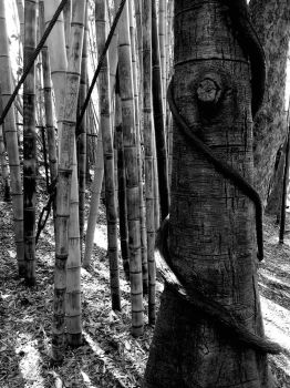 Spiral Tree with Bamboo by MarinoOfFive