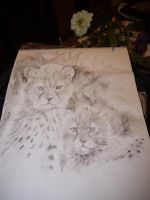 study for cheetah painting by acrylicwildlife