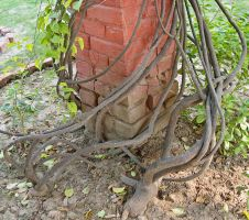 Unrestricted twisted roots by DivsM-stock