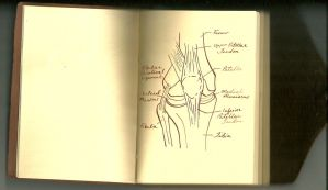 Deadlands: Vincent's Notebook-Anatomy of a Knee by Kysis