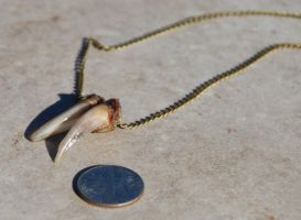 SOLD Armadillo Claws Necklace by kittykat01
