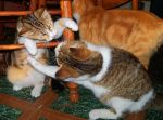.:Cat Fight: You're Doing It Wrong:. by Shadouge4eva