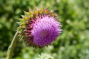 Thistle Me This by SarahCB1208