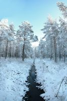snowy forest by KariLiimatainen