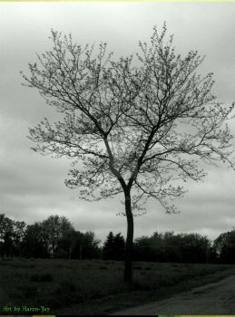Standing Last Was The Tree by Aaron-Jay