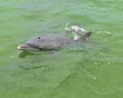 Mother and Baby Dolphin 5 by Lauren-Lee