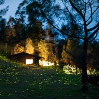 Parade of the Fireflies by VerticalDubai