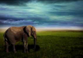Elephant by ChiaraLily9