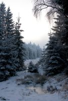 Winterland by Noirerora