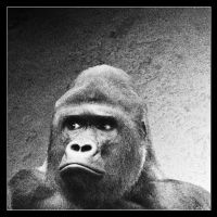 Gorilla by Globaludodesign