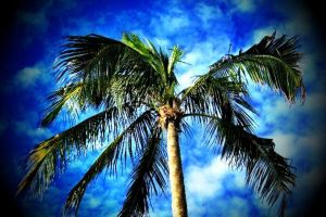Dancing with Palm Trees.. by Spritezy