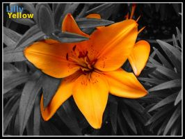 lilly yellow by deathmedic