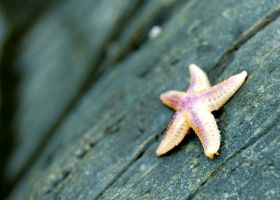 starfish by VastandInfinite