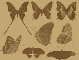Butterfly Photoshop Brushes by aswad-hajja
