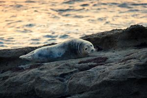 Sunset Seal by rephocus