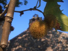 The church in the shadow of chestnuts by OBenjamin